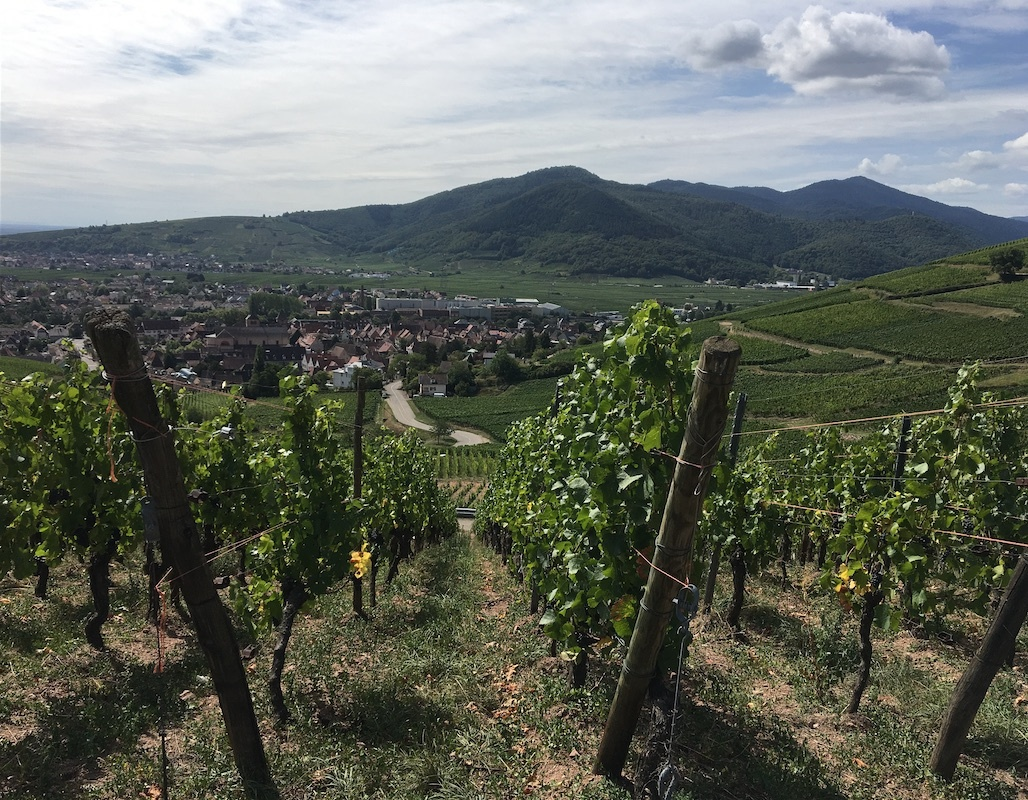 World of Wine Series: England, Alsace & Germany
