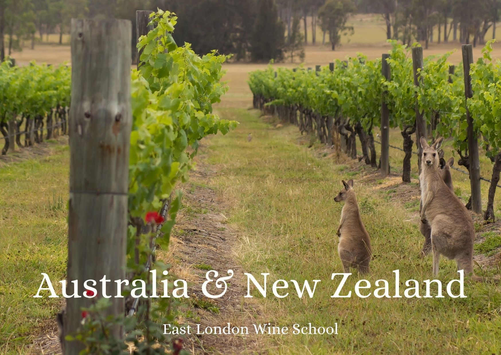 Wines of Australia and New Zealand