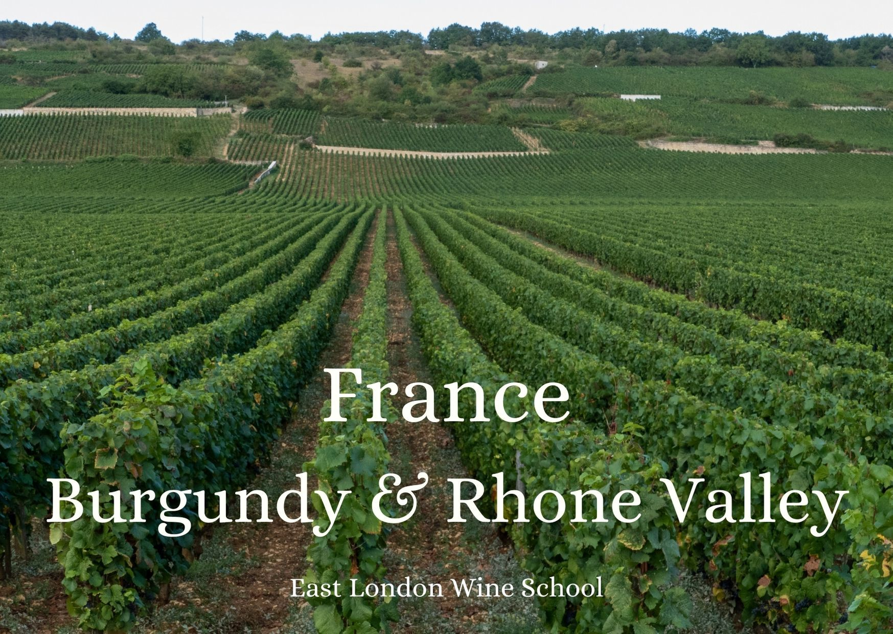 Wines of Burgundy and the Rhone Valley