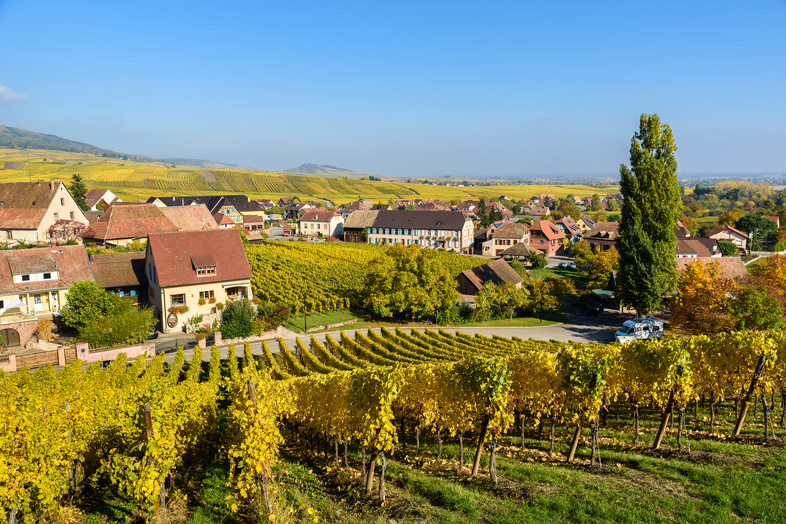 World of Wine: Alsace, Germany, the UK & Austria