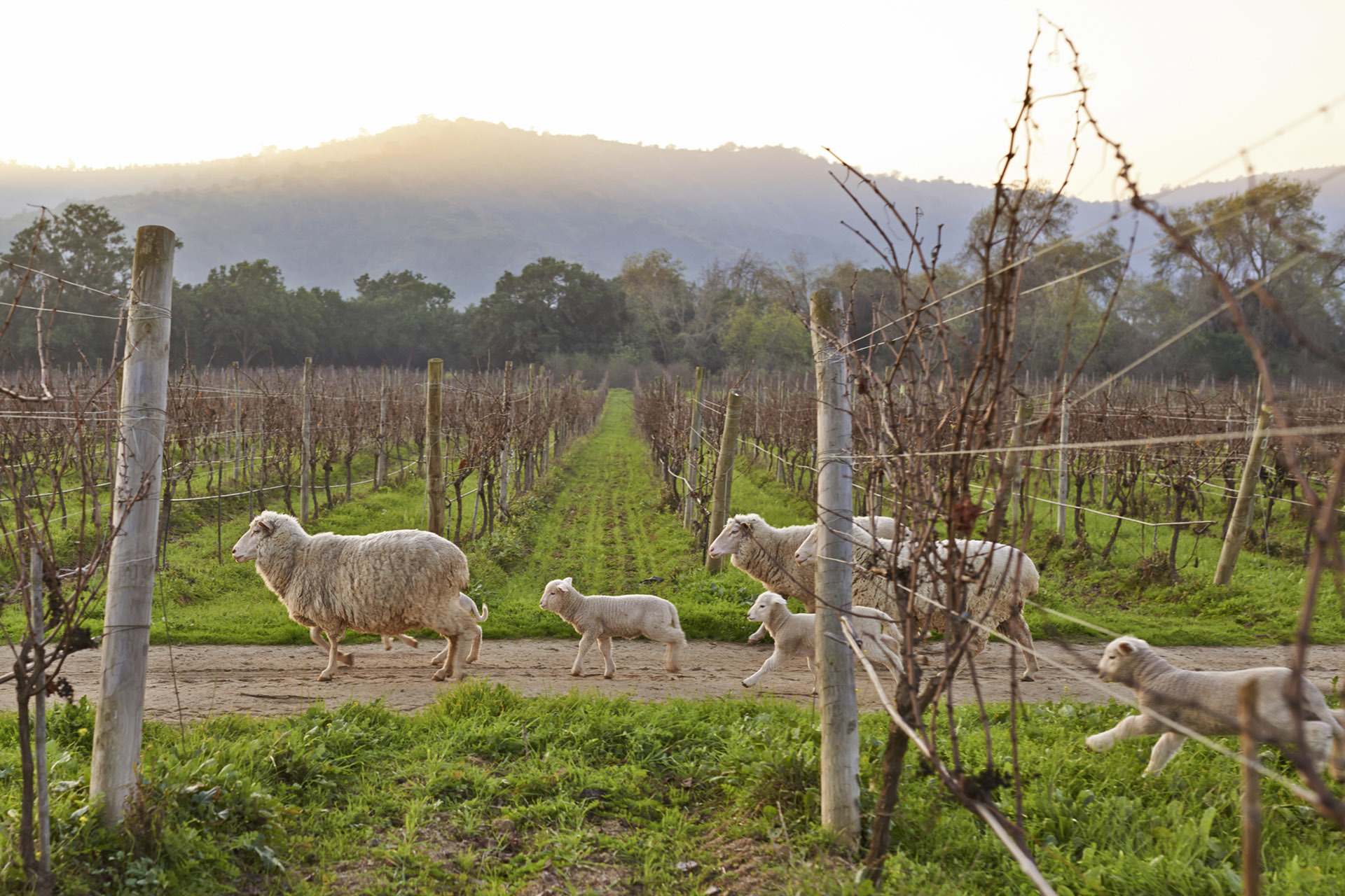 Online - Wines of Australia and New Zealand - 3 Evenings - BYO