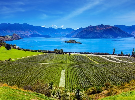 Wonders of New Zealand 4-part Online course for ONE