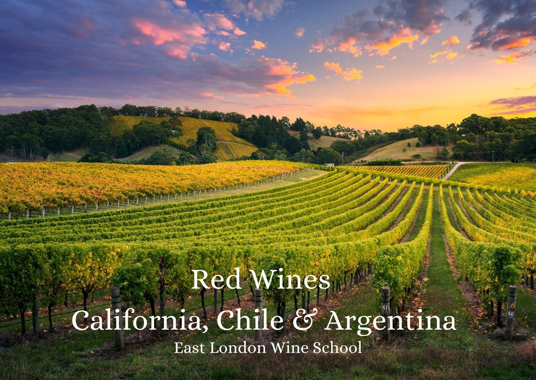 Intro to Red Wines Chile, Argentina, California and Canada