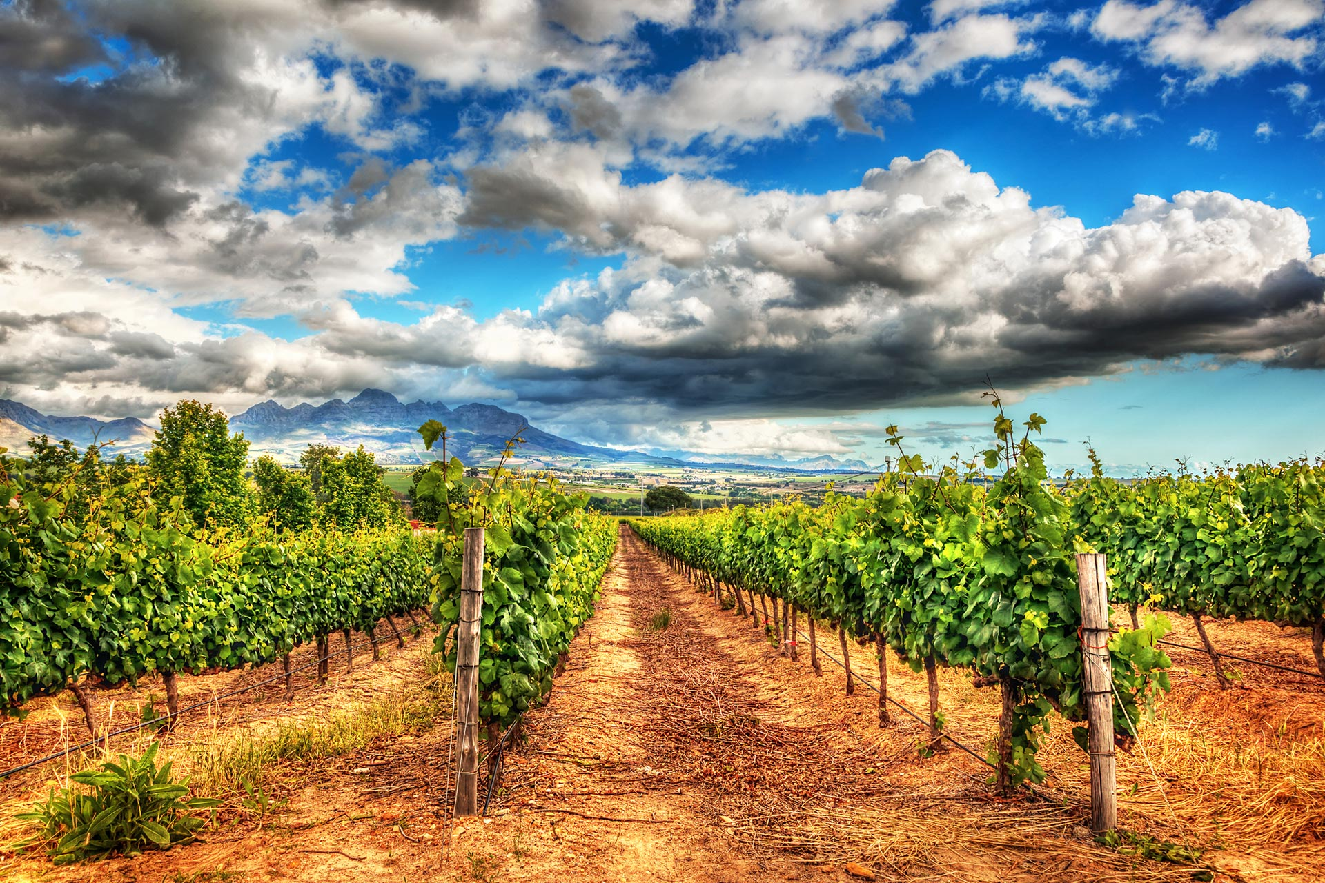 Premium Wines of the New World: South Africa and Others