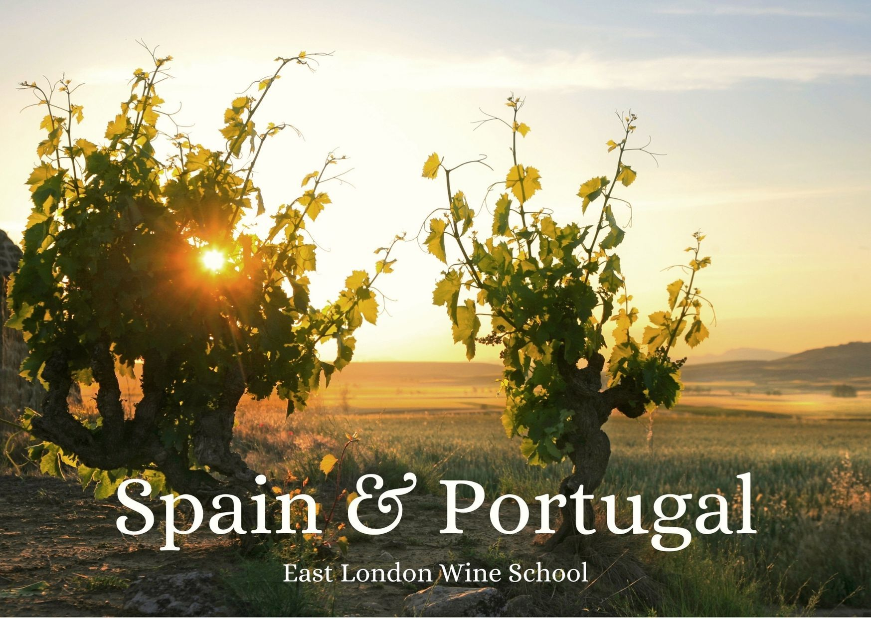 Wines of Spain & Portugal