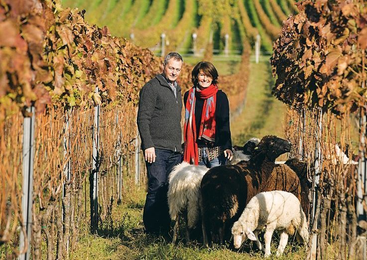 Meet the Austrian winemaker for TWO or more people