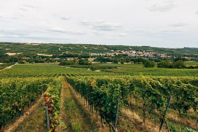 ONLINE - An evening in Burgundy with Drouhin