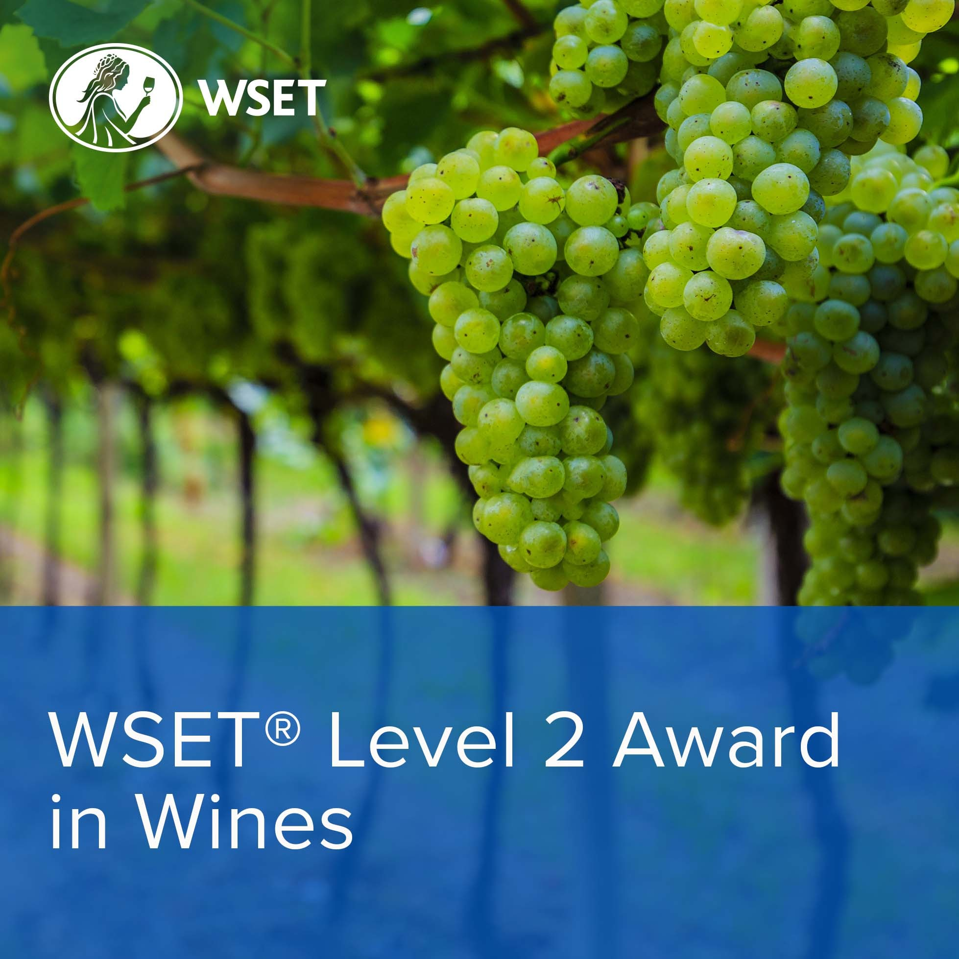 WSET Level 2 Award in Wines: Sunday Format (Classroom)