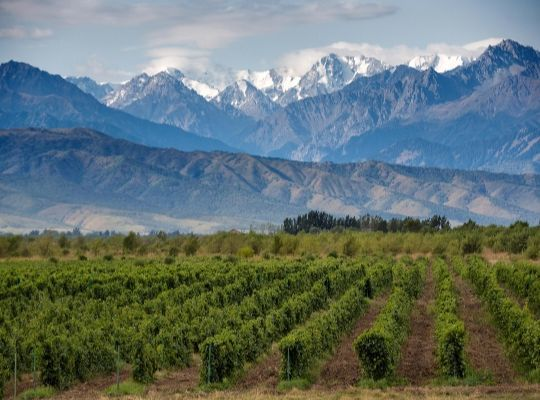 Argentina - Wines with Altitude