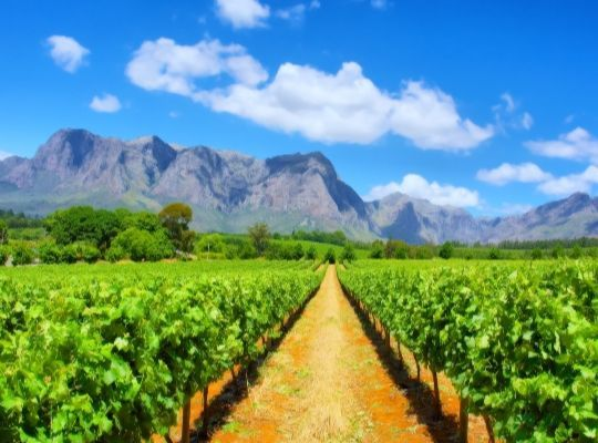 South Africa and Sparkling wine
